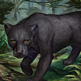 KF3 Black Jaguar (Photo)Thumb.png