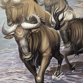 KF3 Blue Wildebeest (Photo)Thumb.png