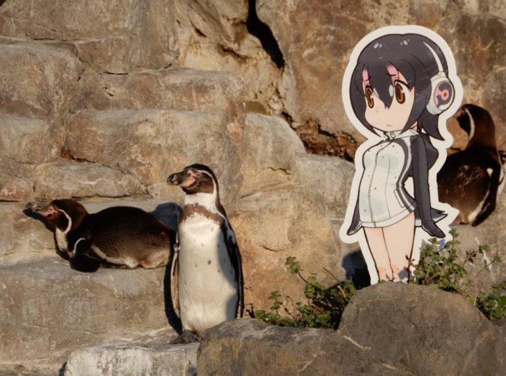Humboldt Penguin Japari Library The Kemono Friends Wiki