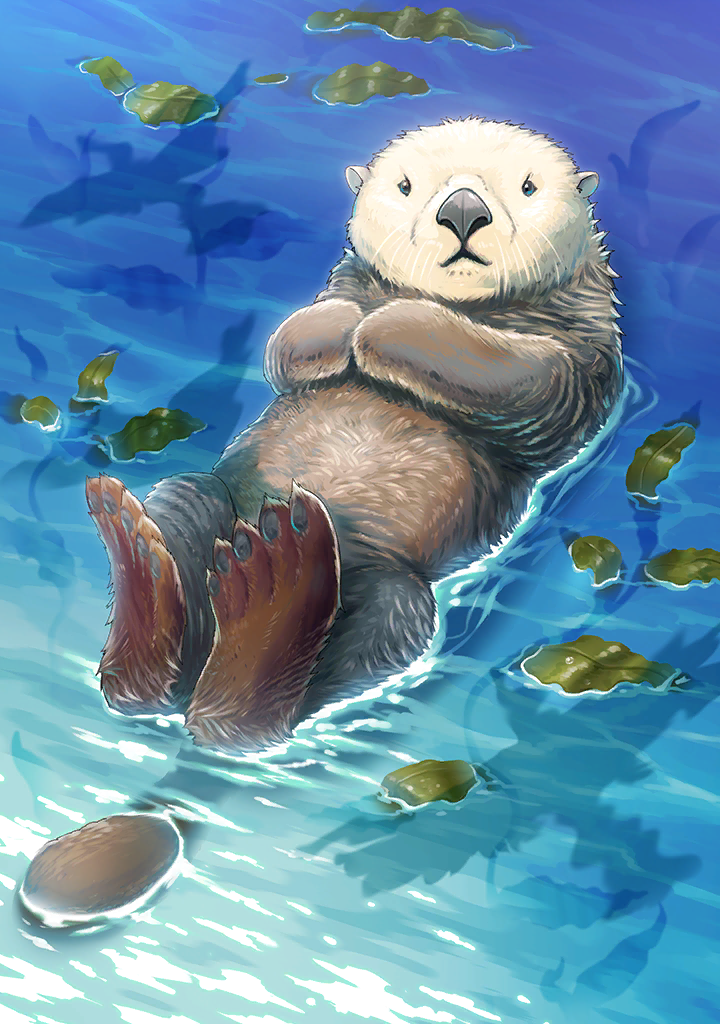 KF3 Southern Sea Otter (Photo).png
