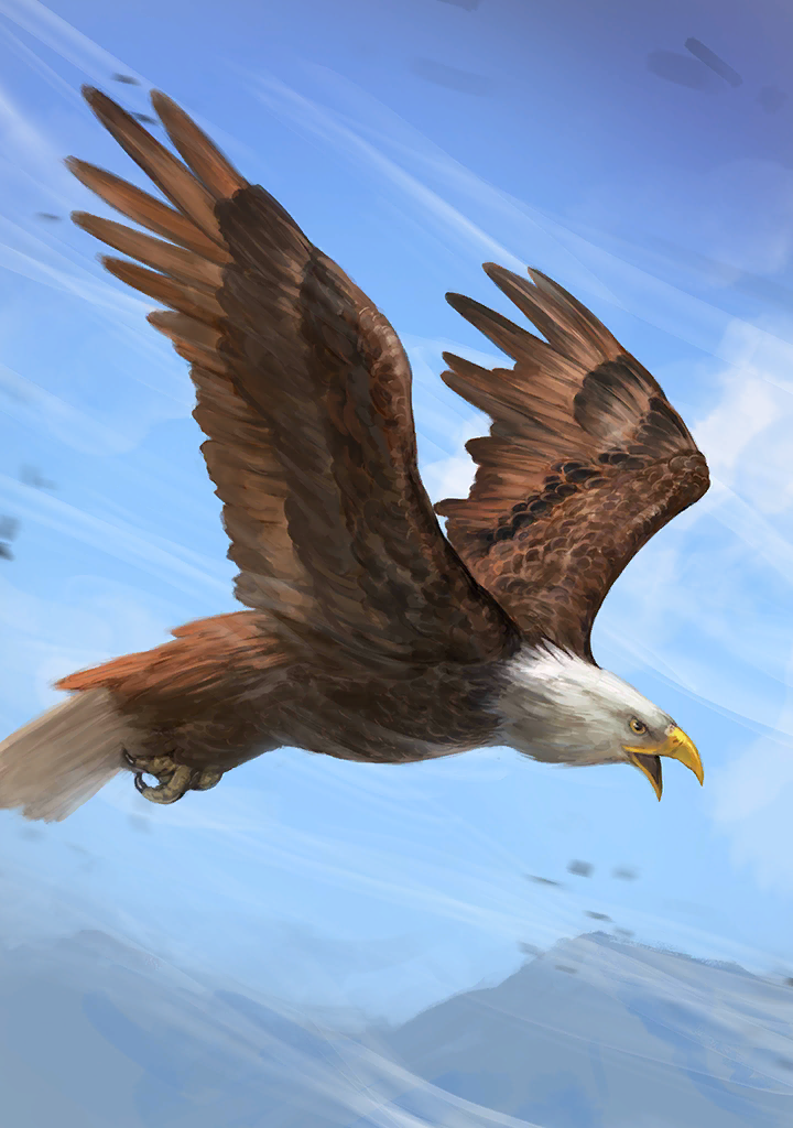 KF3 Bald Eagle (Photo).png