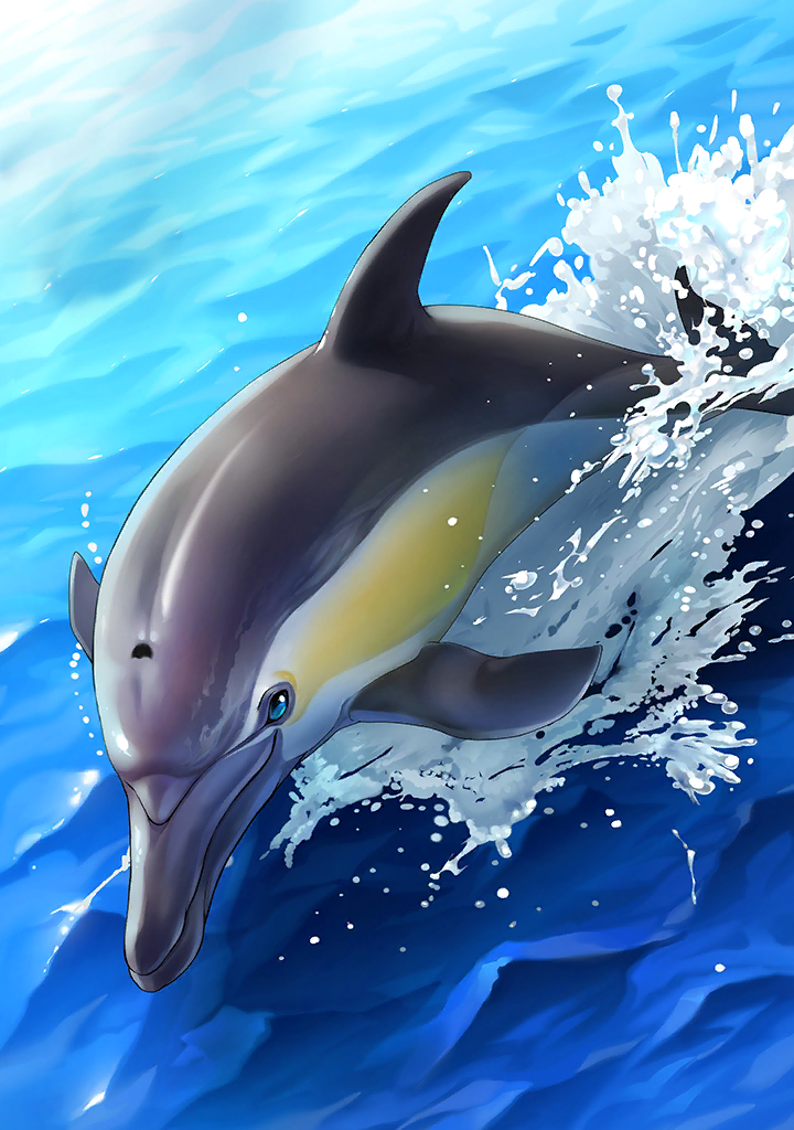 KF3 Short-Beaked Common Dolphin (Photo).png