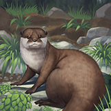 KF3 Asian Small-Clawed Otter (Photo)Thumb.png