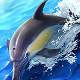 KF3 Short-Beaked Common Dolphin (Photo)Thumb.png