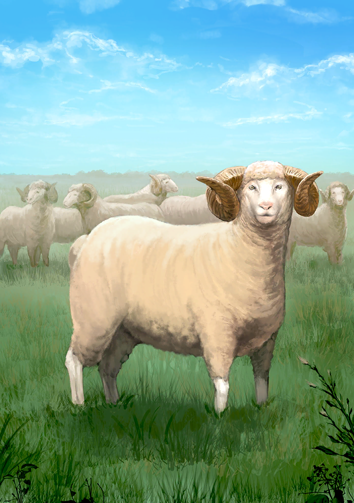 KF3 Sheep (Photo).png