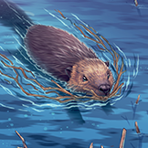 KF3 North American Beaver (Photo)Thumb.png