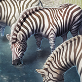 KF3 Plains Zebra (Photo)Thumb.png