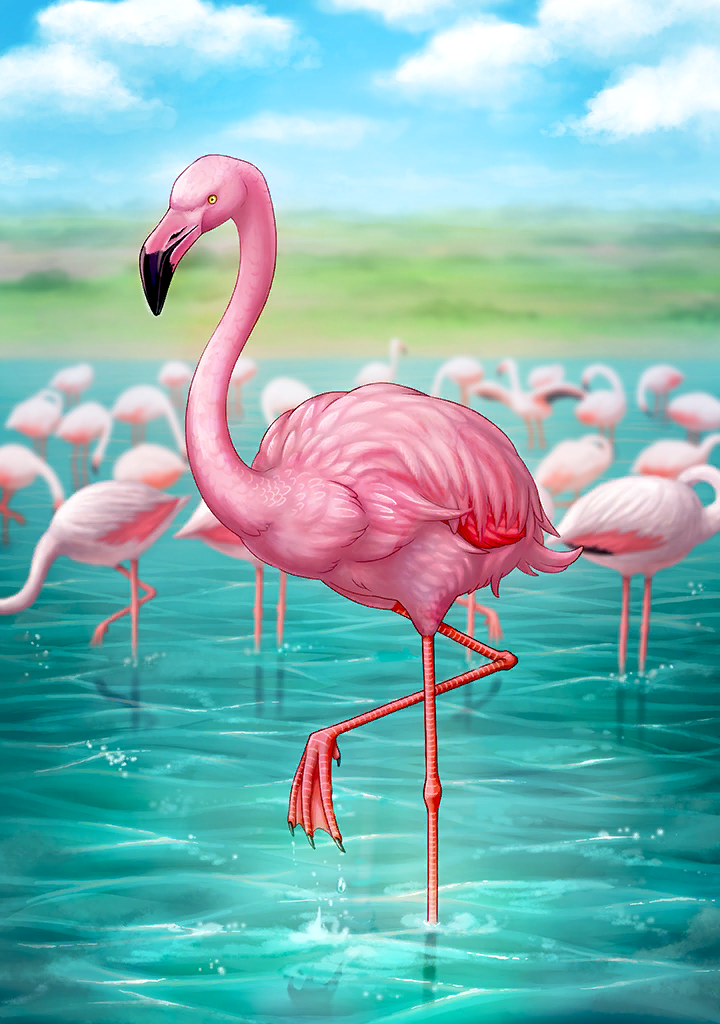 KF3 Greater Flamingo (Photo)+.png