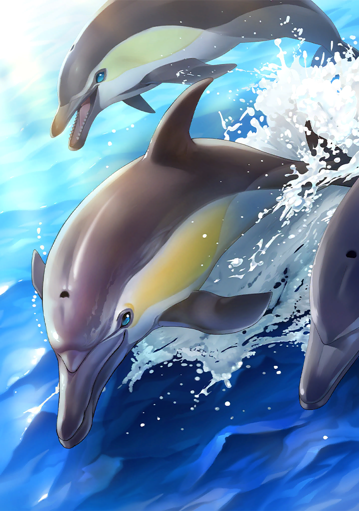 KF3 Short-Beaked Common Dolphin (Photo)+.png