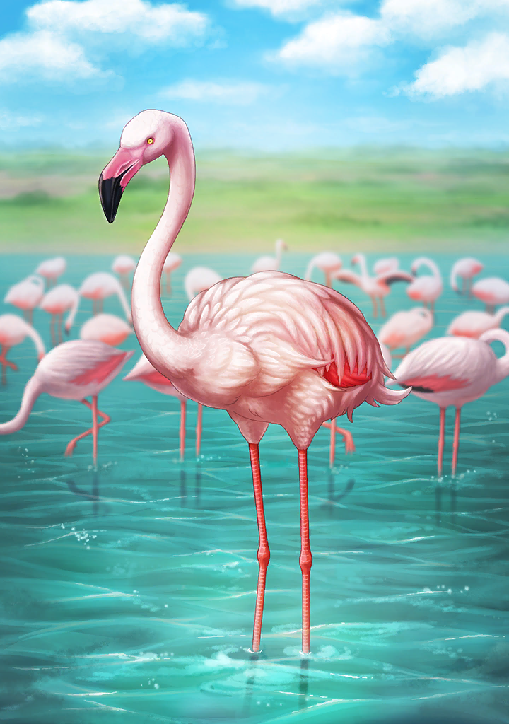 KF3 Greater Flamingo (Photo).png