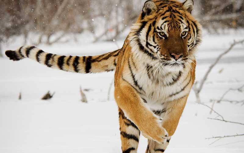 казино владивосток tigre de