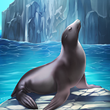 KF3 California Sea Lion (Photo)Thumb.png