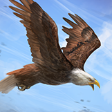 KF3 Bald Eagle (Photo)Thumb.png
