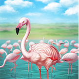 KF3 Greater Flamingo (Photo)Thumb.png