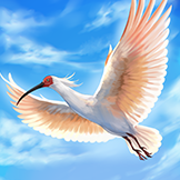 KF3 Crested Ibis (Photo)Thumb.png