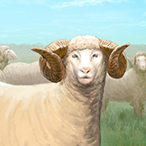 KF3 Sheep (Photo)Thumb.png
